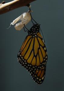 monarch-1518058_960_720