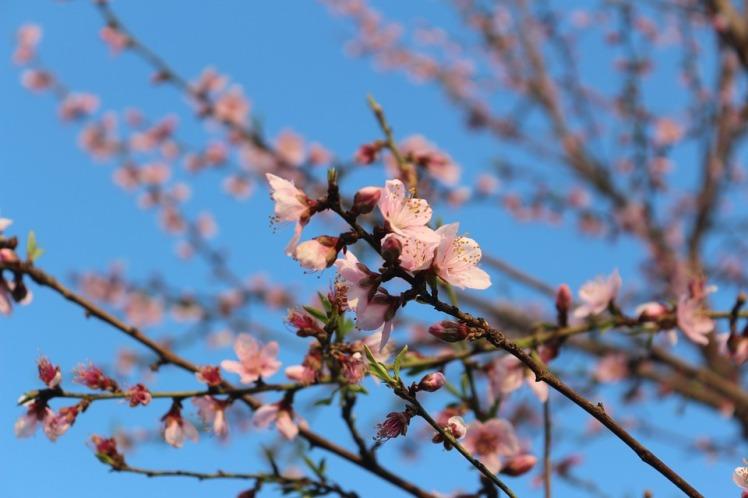 spring-95053_960_720